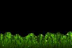 Grass png 1