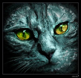 Cat Face by AStoKo by AStoKo