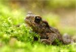 Little toad ~ pretty big