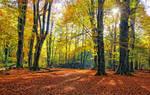 Autumn Jungle forest b