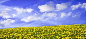 Field blue sky STOCK