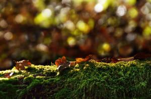Mossy tree trunk STOCK