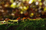 Mossy tree trunk STOCK