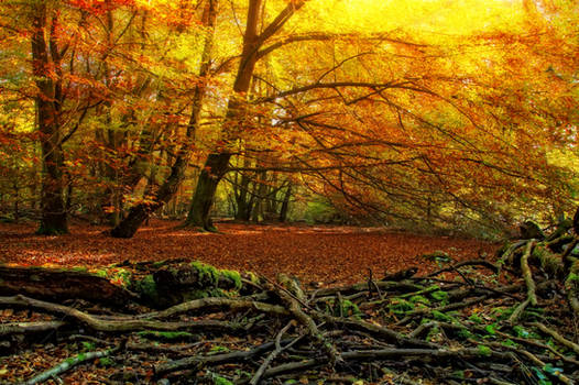 Autum Forest STOCK by AStoKo by AStoKo