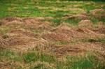 Meadow field STOCK