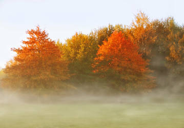 Autumn Trees ~ Foggy morning copy1 by AStoKo