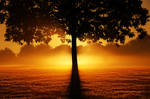 Tree Sunset Background STOCK