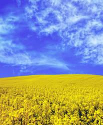 Field yellow STOCK by AStoKo