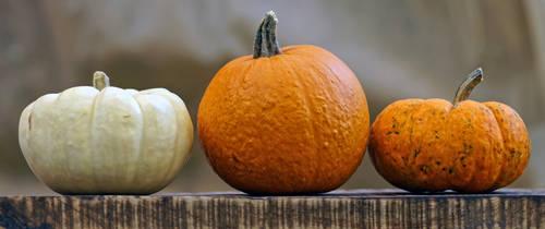 Halloween Pumpkin STOCK 01