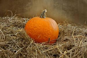 Halloween Pumpkin STOCK 07