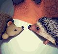 Hedgehog by Crazy-Lola