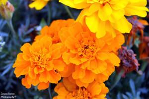 Orange by ZaraaLeanne
