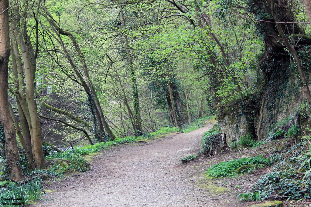 Woodland Walk by ZaraaLeanne