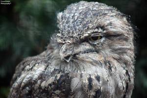 Feathered Friend by ZaraaLeanne