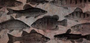 Antique Fish Brushes