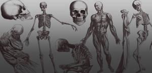 Skeleton Brushes for PSD by arsgrafik