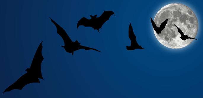 Halloween Vectors: Bats + Moon by arsgrafik