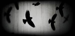 Bird Brushes by arsgrafik