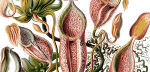 Vector Carnivorous Plant