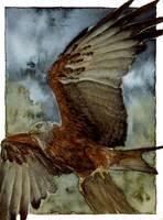 Red Kite by elektroyu