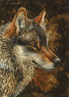 Winter Wolf ACEO by elektroyu