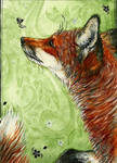 Red Fox ACEO