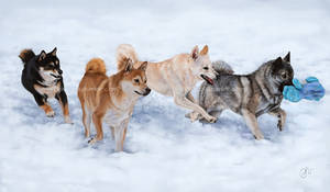 Playful Pack