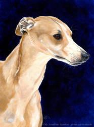 Pet portrait - Whippet by elektroyu
