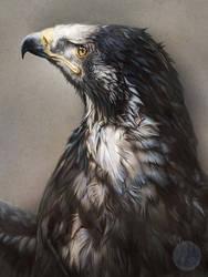 Steppe Eagle by elektroyu