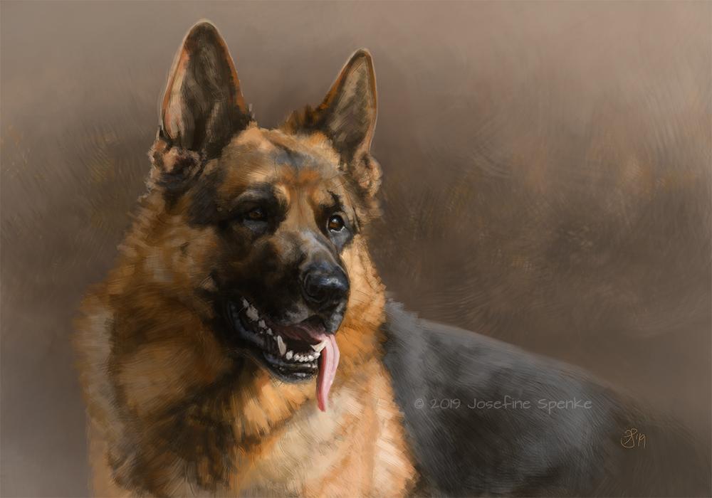 A German Shepherd Dog by elektroyu