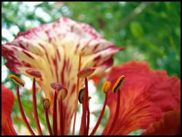~ Red Flower 3 ~ by soumya-digi