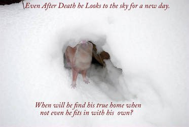 Death and Snow by shadow---cat