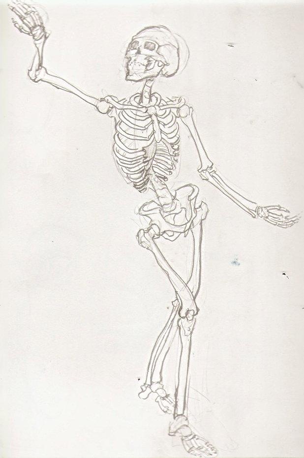 andart detailed skeleton by wingkitsune on DeviantArt