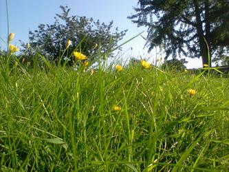Little Flowers by tye104