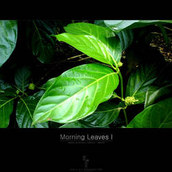 Morning Leaves I by yager12