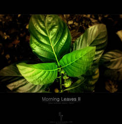 Morning Leaves II by yager12