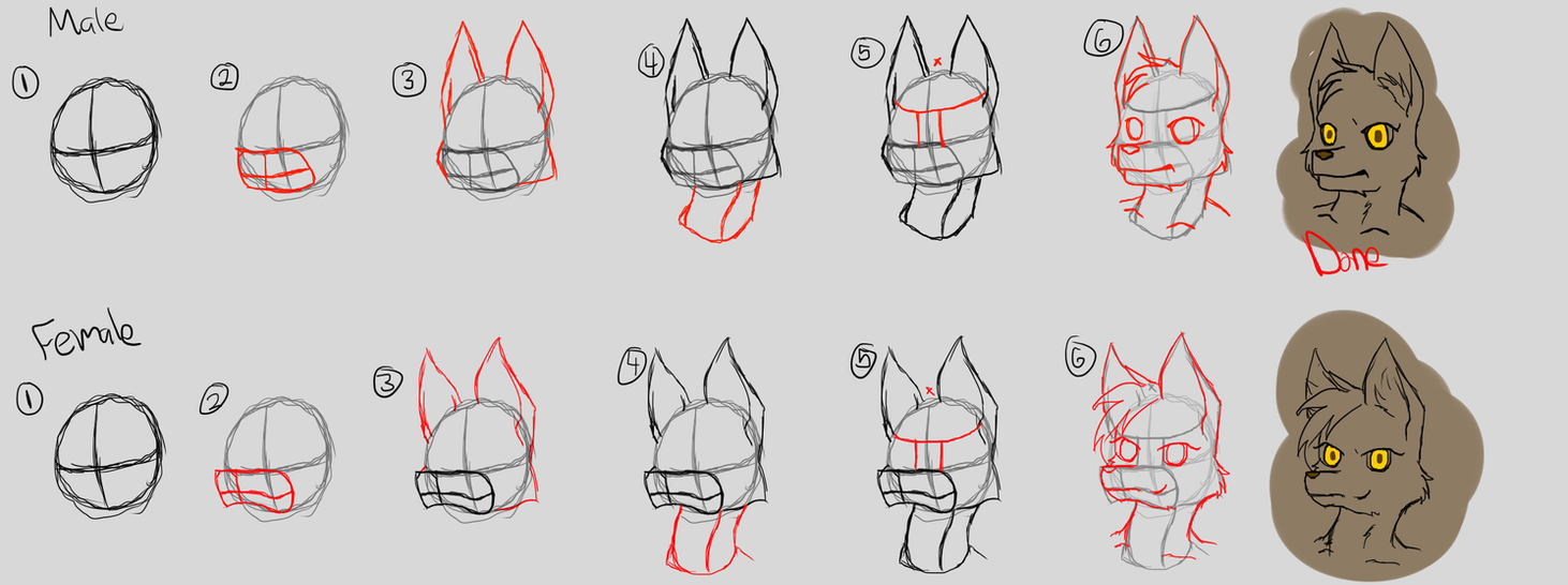 how to draw a wolf furry step by step