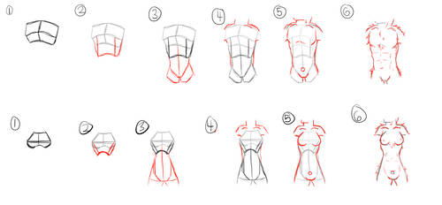 How To Torso (anthro ish) [6 step]