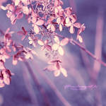 Glittering by Inside-my-ART