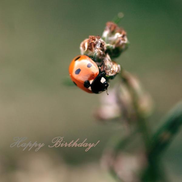 Crveno ... - Page 2 Happy_Birthday_3erdbeereis3_by_Inside_my_ART