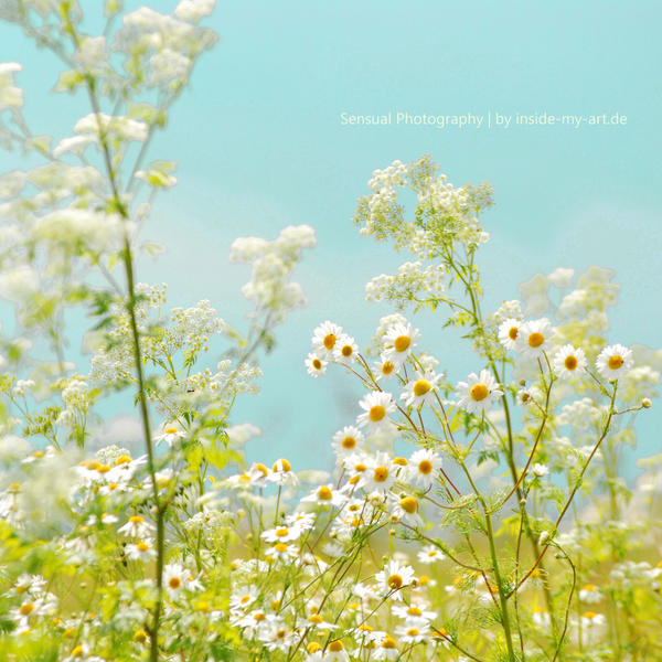 Summer day by Inside-my-ART