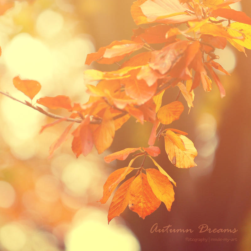 Autumn Dreams by Inside-my-ART