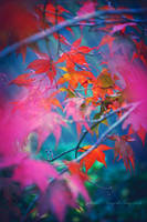 Color flash by Inside-my-ART