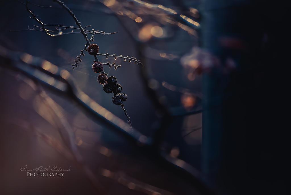 Dark love by Inside-my-ART
