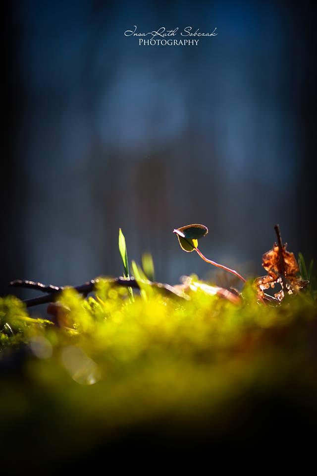 Small world by Inside-my-ART