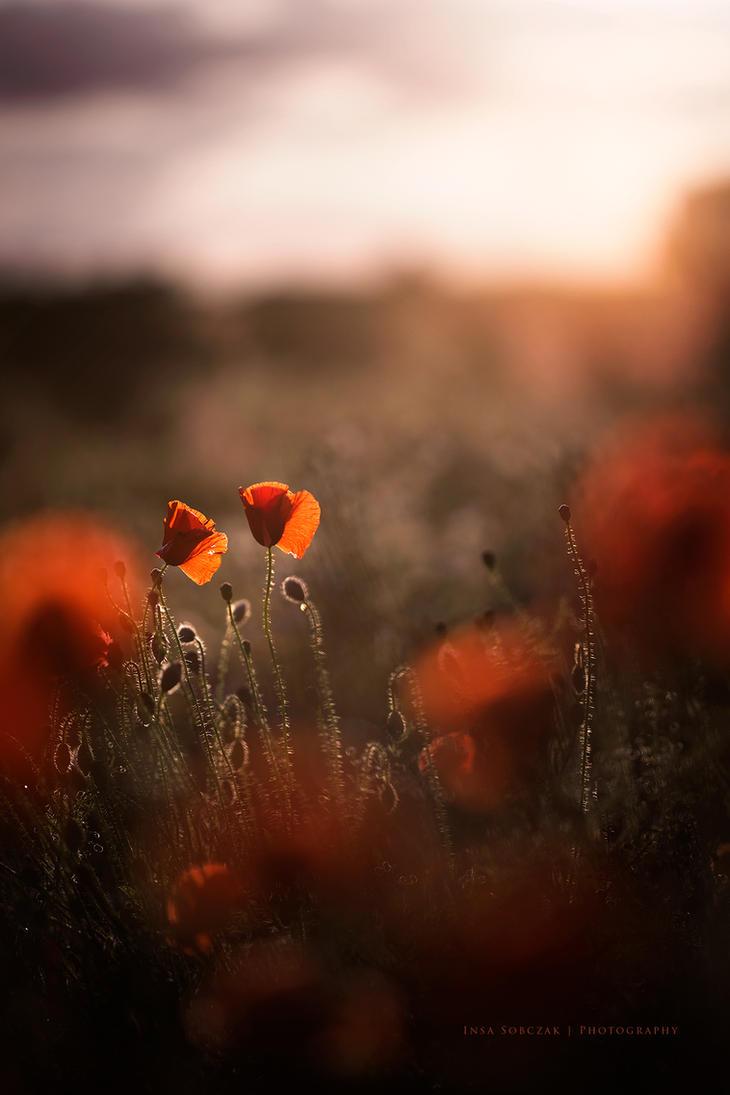 Poppy love by Inside-my-ART