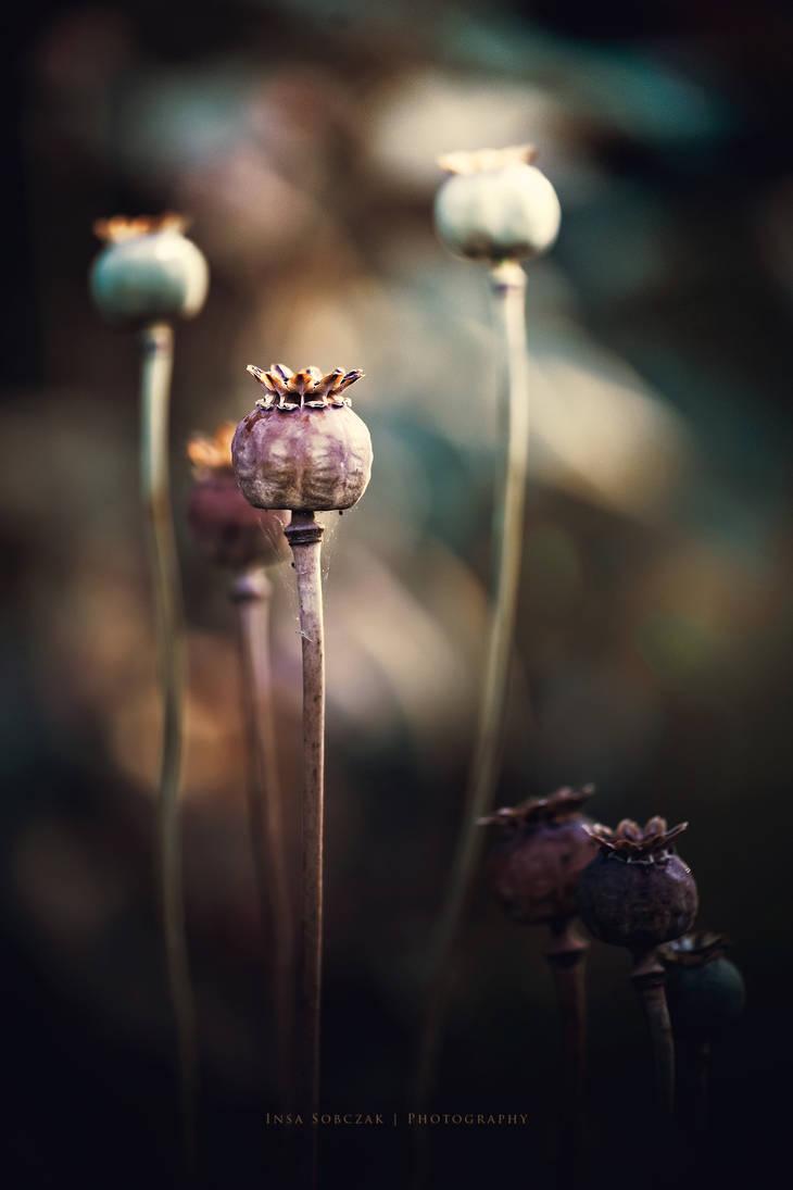 Poppy seed by Inside-my-ART