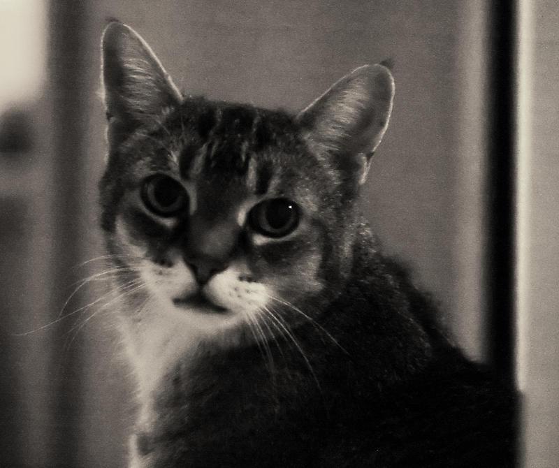 Innocent Cat by vmulligan