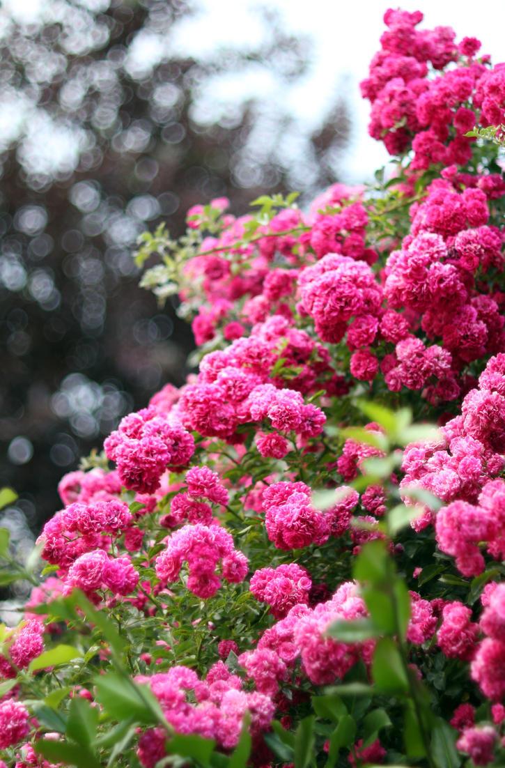 Pink Flowers II by vmulligan