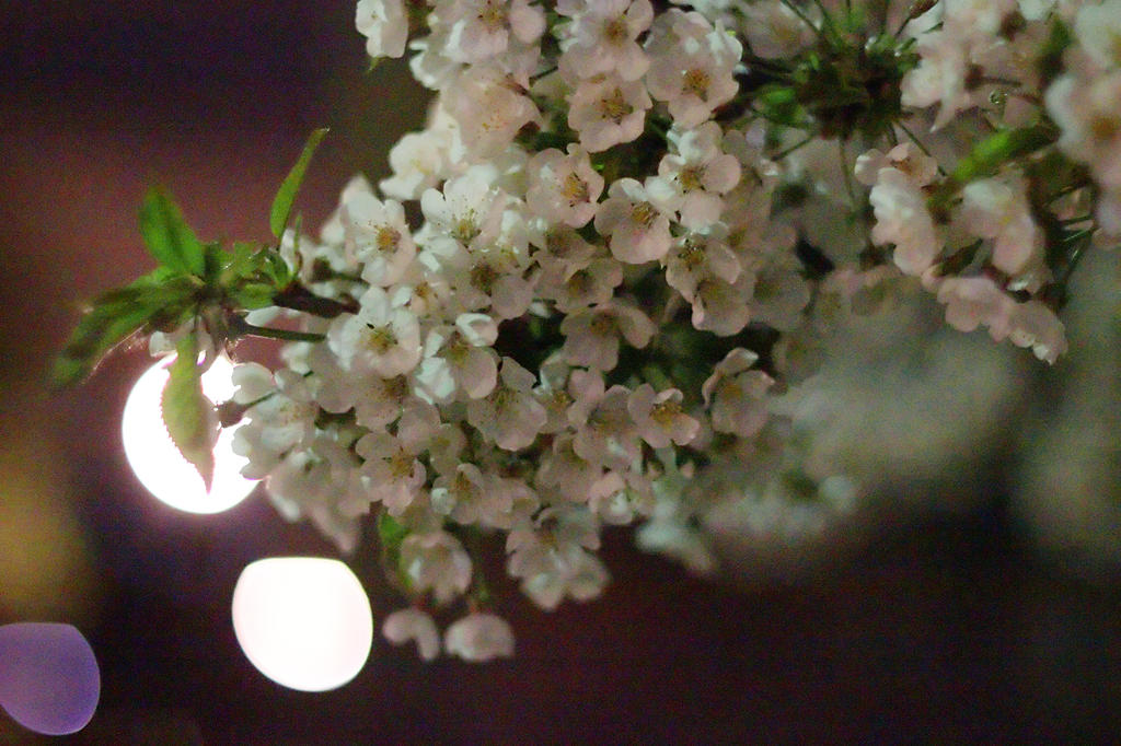 Night Blossoms #1 by vmulligan